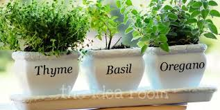 Small Picture Awesome Indoor Herb Pots Images Interior Design for Home