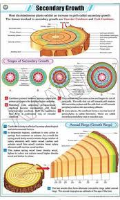 Secondary Growth For Botany Chart