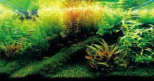 aquascaing algae free aquarium