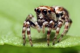 Common Spiders In South Africa Sciencing