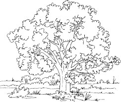 Small Picture Coloring Page Tree
