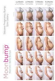 Pregnancy Stomach Size Chart 27 Expository Sizes Of Baby In Pregnancy