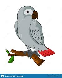 African Grey Parrot Stock Illustrations – 115 African Grey Parrot Stock  Illustrations, Vectors & Clipart - Dreamstime