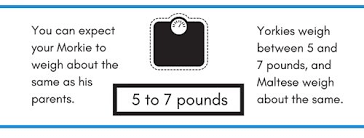 Morkie Puppy Weight Chart How Big Will My Puppy Get How Much Will My Puppy Weigh