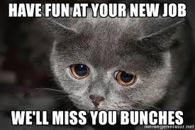 have fun at your new job we ll miss you bunches sadcat meme generator