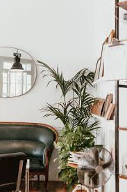 Interior Design Plants Inside House Hd Wallpaper Gray Fan Beside Indoor Green Plants