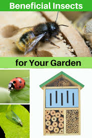beneficial insects for your garden landscape