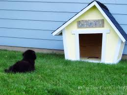 crooked doghouse