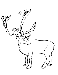 Small Picture Caribou 2 Animals Printable coloring pages