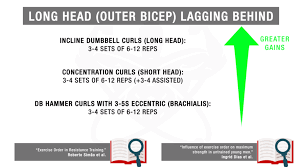 Biceps Exercise Chart The Ultimate Dumbbell Bicep Workout You Need For Massive Arms