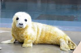 no we don t cuddle the seals says the zoo s rebecca sturniolo says as cute and cuddly as they are they are pretty feisty