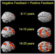 hersenen volgroeid leeftijd