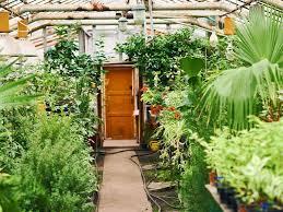 balcony garden. Plant Nursery Shop Balcony Garden