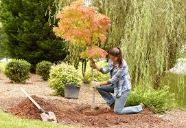 Small Picture New Tree Planting Guide at The Home Depot