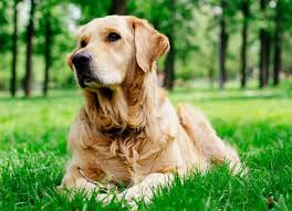 Skin Problems in Dogs | petMD