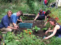 community gardening. Plain Gardening UNIVERSITY COMMUNITY GARDEN To Community Gardening I