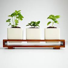 kitchen indoor herbs planter