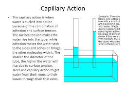 Capillary Action Magdalene Project Org