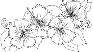 Flower Color Pages Flower Pictures Without Colour Free Coloring
