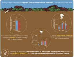 Effects of climate warming on Sphagnum photosynthesis in ...