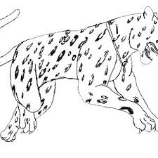 Adult Baby Jaguar Coloring Pages Baby Jaguar Coloring Pages