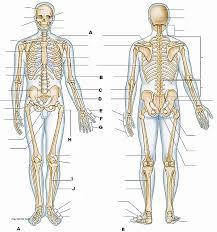 Bones Of The Body Worksheet - Checks Worksheet