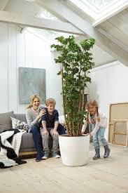 breathtaking large indoor planter 15 brussels wheels size 47cm x 43cm h 3 17164 p sofa glamorous large indoor