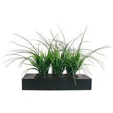 Tall Decorative Grass Decorative Grass Decorative Grasses Decorative Grass Plants