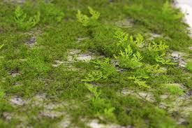 Moss Mats Moss Fern Place Mat 20in