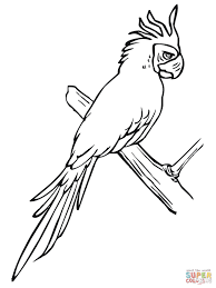Small Picture Bird Perching on a Tree Branch coloring page Free Printable