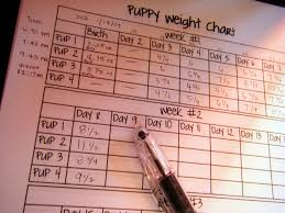 Puppy Weight Chart They Are Growing Well This Was Taken A