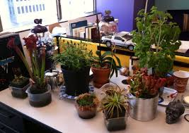office cubicle plants. Office Cubicle Plants W
