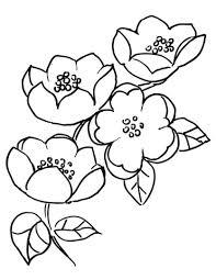 Disegno Di Ramo Di Melo In Fiore Da Colorare Disegni Da Colorare E