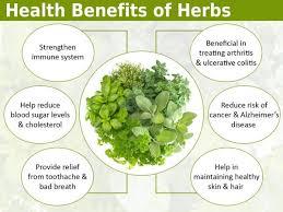 common herbs health benefits of herbs