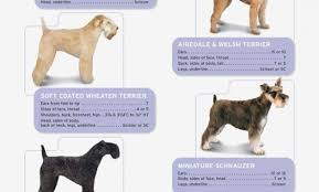 Dog Clipper Sizes Chart Buurtsite Net