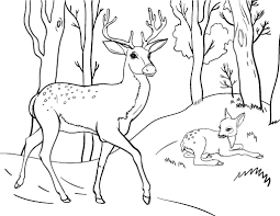Small Picture Free Deer Coloring Page