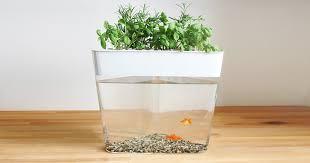 ecofarm this stylish aquarium uses fish waste to grow edible herbs