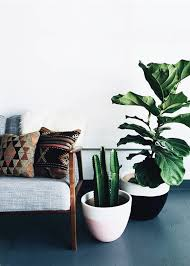 Beautiful Modern Indoor Plants Pictures - Amazing House Decorating .