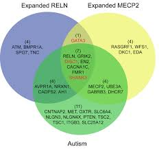 Accuracy And Precision Venn Diagram Venn Diagram Of Genes Associated With Autism Reln Related Blue