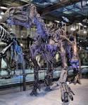 family iguanodontidae