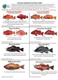California Rockfish Chart Pin On Rockfish And Lingcod