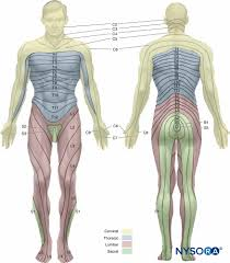 Spine Levels Chart Spinal Anesthesia Nysora