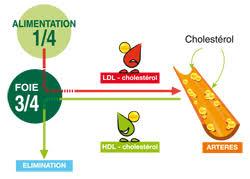 le cholestérol est mauvais pour la santé