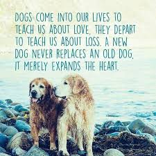 Quotes About Dogs Impressive Farewell Letter From Animals Pinterest Dog Animal And Doggies