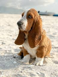 The Puppy Socialization Exposure Checklist Whole Dog Journal