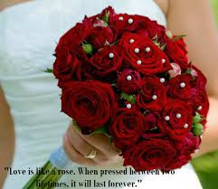 latest most beautiful red rose pictures