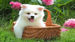cute puppy pictures free wallpaper