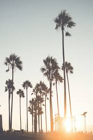 Exellent Palm Trees Tumblr Vertical Find This Pin And More On By Inside Decorating Ideas
