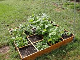 small square foot backyard vegetable garden house design with wire trellis and wood raised bed ideas
