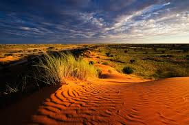 Природа растения и животные Африки Растительный мир Африки